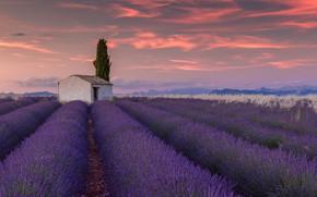 Picture field, clouds, flowers, house, France, lavender, plantation, Valensole