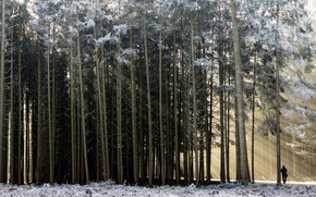 Picture winter, forest, people, morning