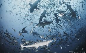 Picture sea, the ocean, fish, shark, sharks, underwater world