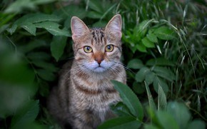 Picture grass, cat, look, leaves, muzzle, cat