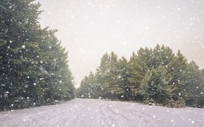 Picture cold, winter, snow, nature, tree, beauty