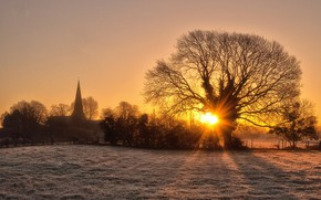 Picture the sun, rays, sunset, tree, England, Ashby de La Zouch
