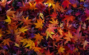 Picture autumn, leaves, colorful, background, autumn, leaves, autumn, maple