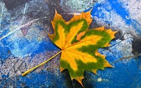 Picture autumn, nature, sheet, color