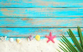 Picture sand, beach, background, Board, star, shell, summer, beach, wood, sand, marine, starfish, seashells