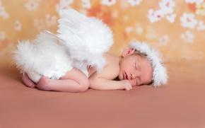 Picture sleep, wings, angel, baby, sleeping, wings, baby, angels, sleep, angel, sleep, Infants