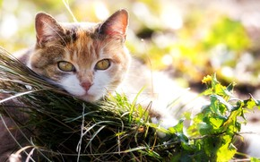 Picture cat, grass, eyes, look
