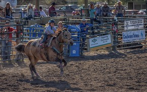 Picture horse, girl, Rodeo