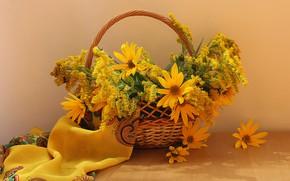 Picture goldenrod, flowers, still life, basket, autumn
