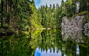 Picture forest, lake, reflection, tree