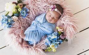 Picture flowers, sleep, sleeping, girl, basket, baby