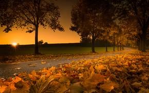 Wallpaper leaves, autumn, sunset, trees, road, Austria, foliage
