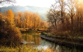 Picture forest, river, bare trees