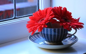 Wallpaper sill, gerbera, Cup, window, still life, saucer, flowers