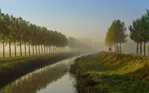 Picture trees, fog, island, channel, Netherlands, Goeree-Overflakkee