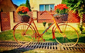Picture summer, flowers, bike
