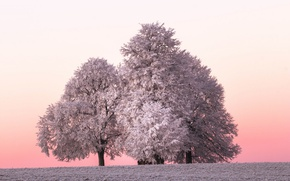 Picture winter, frost, tree