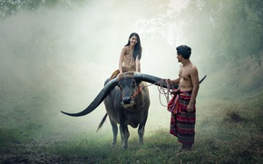 Picture people, couple, thailand, cow