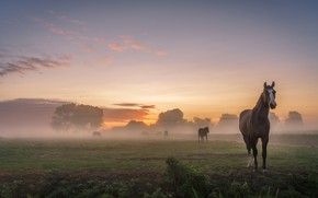 Wallpaper field, summer, the sky, landscape, nature, fog, dawn, horses, morning, village, horse, pasture, houses