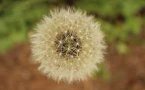 Picture flower, macro, dandelion, spring, flowering, flower, macro, bokeh, bokeh, spring, Boke, dandelion, oduvan