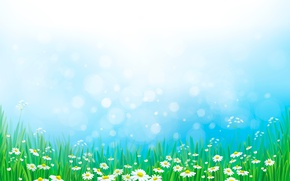 Picture grass, chamomile, meadow