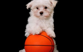 Picture the ball, dog, puppy