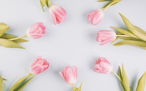 Picture background, Flowers, tulips