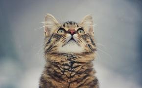 Wallpaper background, eyes, kitty, mustache