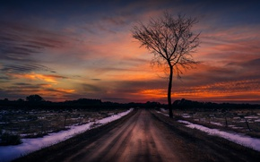 Picture road, the sky, tree, the evening