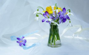 Wallpaper flowers, tenderness, beauty, plants, spring, snowdrops, crocuses, still life, primroses, a bunch, composition, flora, bouquets, ...
