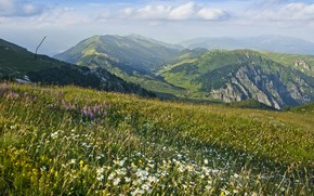 Picture flowers, mountains, chamomile, valley, meadow