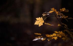 Picture autumn, macro, light, sheet, foliage, branch, leaf, the dark background