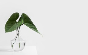 Picture table, plant, white background, vase, glass