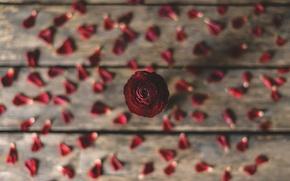 Picture flower, background, petals