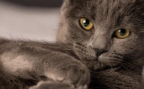 Wallpaper cat, brown, look