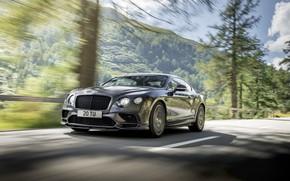 Picture continental, bentley, Bentley Continental, supersports