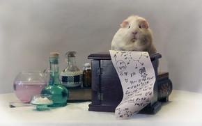 Picture books, Guinea pig, formula, bulb