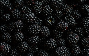 Picture macro, berries, BlackBerry