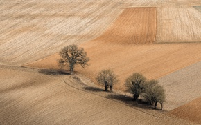 Picture field, trees, nature