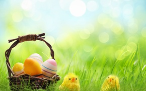 Wallpaper spring, grass, basket, wicker, basket, Easter, bokeh, eggs, Easter, chickens, holidays, chickens, spring, eggs
