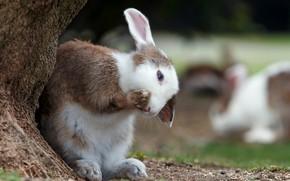 Picture tree, legs, rabbit