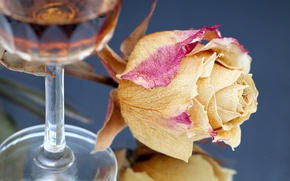 Picture flower, glass, rose