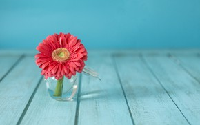 Wallpaper flower, vase, flower, gerbera