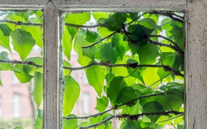 Picture greens, leaves, window