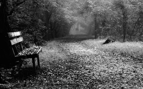 Picture fog, Park, bench