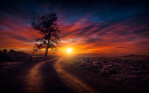 Picture road, the sky, the sun, sunset, tree
