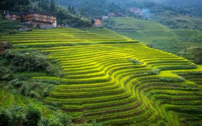 Picture mountains, house, slope, China, tea plantation, Guangxi, terraces