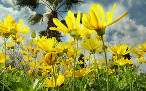Picture the sky, clouds, nature, petals, meadow