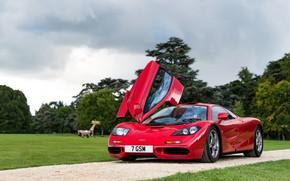 Picture red, Park, McLaren, sports car, McLaren F1, F1