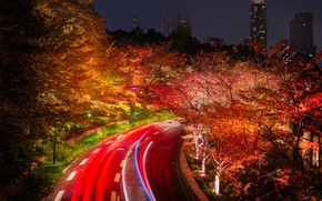 Wallpaper lights, Tokyo, night, lights, Japan, road, trees, home